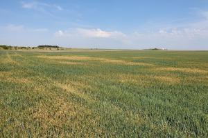 Агропортал ще проведе второ пролетно обследване на посевите в Североизточна България