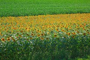 Агропортал ще проведе за първи път обследване на пролетните култури в България
