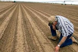 В Украйна зимните зърнени култури са покълнали на 86% от площите
