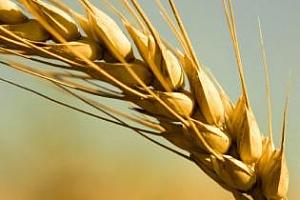 Йордания отново обяви търг за пшеница