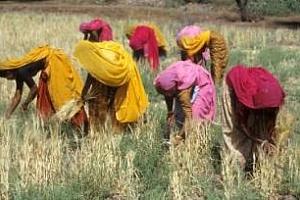Индия може да заеме 7-мо място в света по износ на пшеница