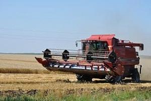 Качеството на пшеничната реколта в Австралия се влошава още повече