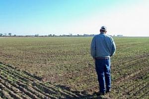 Състоянието на посевите със зимна пшеница в САЩ продължава да се влошава