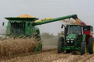 Прибирането на царевицата във Франция все още продължава