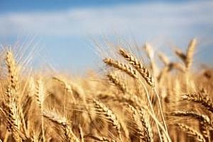 Италия намали вноса на зърно