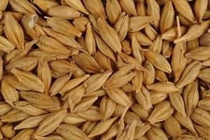 Тунис обяви търг за закупуването на фуражен ечемик