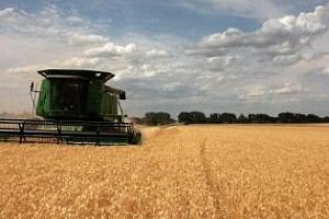 Пшеницата в САЩ през 2013 г: Повече посевни площи - по-малка реколта