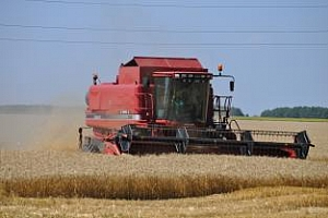Световното производство на пшеница ще се вдигне заради ЕС