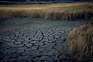 Поредно понижение на реколтата от мека пшеница в Испания заради сушата