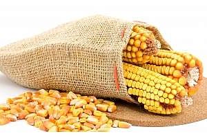 Украински агрохолдинг ще достави в Китай около 600 хил. тона царевица
