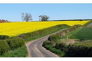 Rabobank: Посевите с рапица ще бъдат намалени с 10% в Австралия