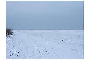 Състоянието на посевите от зимна рапица в Румъния е лошо