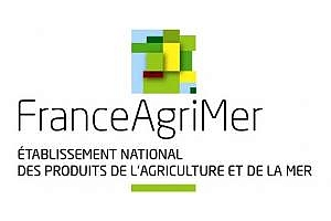 FranceAgriMer увеличи прогнозата за износ на пшеница от Франция