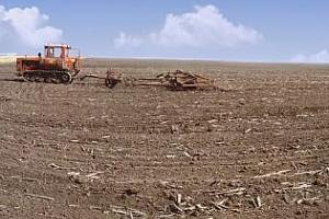 Сърбия увеличи площите със зимна пшеница и ечемик