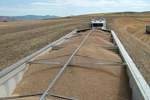 Прогнозата за износа на пшеница от САЩ е понижена с 1 млн. тона