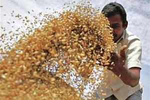 Индия увеличава квотата за износ на пшеница