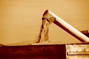 Сирия обяви търг за закупуването на 100 хил. тона пшеница