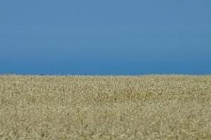 Производството на пшеница в Турция е намаляло с 8% през 2012 г.