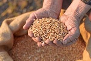 Украйна определи цените за продажбата на пшеница за износ