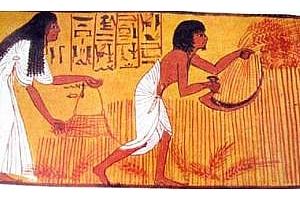 Египет закупи на търг американска пшеница