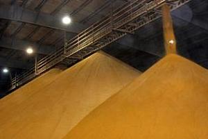Износът на руска царевица през декември - предимно в Турция