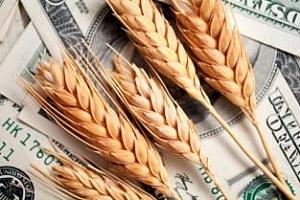 Алжир закупи 400 хил. тона пшеница