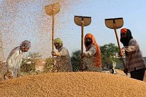 Индия с два търга за продажба на пшеница