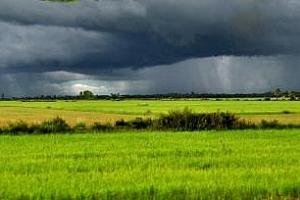 Реколтата от царевица в Аржентина се нуждае от дъжд