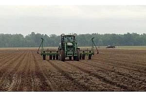 Фермерите в Аржентина завършват сеитбата на царевица