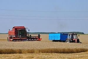 България е реализирала 75% от експортния си потенциал за пшеница