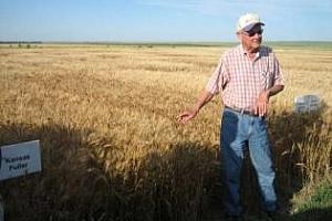 ЕС ще увеличи вноса на пшеница от САЩ