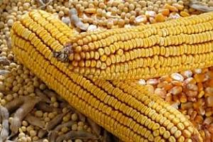 Informa Economics повиши прогнозата си за реколта от царевица и соя в Бразилия и я понижи за Аржентина