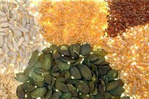 Борса за семена на Добричкия панаир започва днес