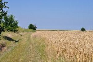 Посевните площи с мека пшеница в България ще се увеличат с 3%
