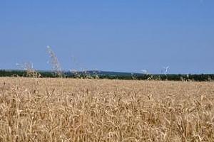 Strategie Grains: през 2013/14 ЕС ще произведе по-малко мека пшеница и повече царевица