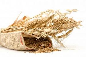 Египет ще проведе търг за закупуването на пшеница