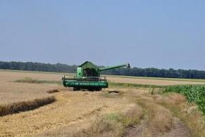 Сутрешно кафе: Соята и Египет подкрепиха пазара на пшеница в САЩ
