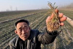 Китай активно внася пшеница от Австралия, Канада и САЩ