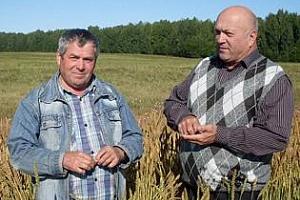 95 млн. тона зърно ще произведе през 2013 г. Русия