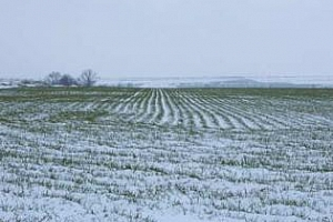 Зимните култури в ЕС - засега без загуби