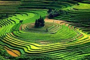 Ориз: Понижението при арпата продължава