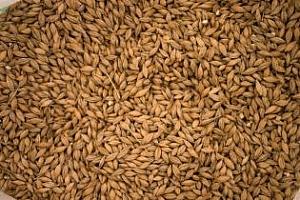Китай може да увеличи вноса на американско зърно