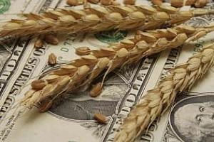 Турция вече купува руска пшеница от новата реколта