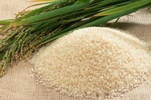 Ориз: Майските фючърси на оризовата арпа се търгуваха на цена от $321 за тон