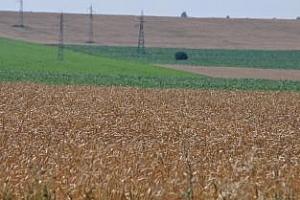 MARS: Добивите от зърнени култури в ЕС ще се вдигнат