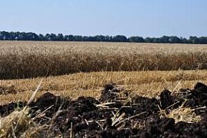 Пазарът на земеделска земя в България е подкрепен от прогнозите за добра реколта