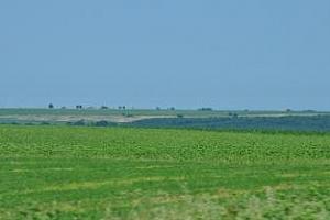 Реколтата от пшеница и царевица в Румъния ще бъде много по-добра от миналогодишната