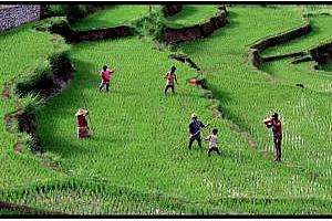 Ориз: Значителен ръст в цената на арпата