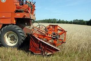 Informa Economics повиши прогнозата за реколтата от пшеница в Канада, Китай и САЩ