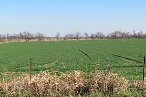 Състоянието на зърнените посеви в България